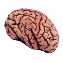 Simulated Body Parts ~ Brain
