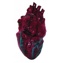 Simulated Body Parts ~ Heart